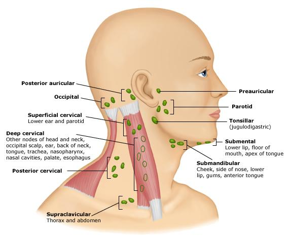 Lymph Nodes Thyroid Trouble